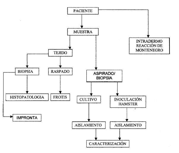 Las medicinas veterinarias contra los helmintos